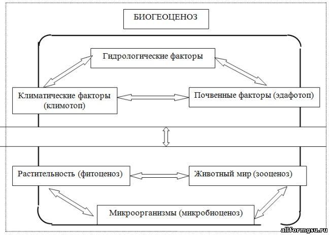 Схема биогеоценоза